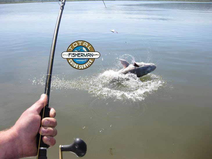 Columbia river sturgeon fishing guides total fisherman for Columbia river fishing guides