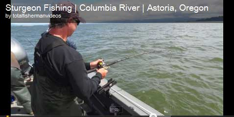 Sturgeon Fishing Video | Astoria July 2011